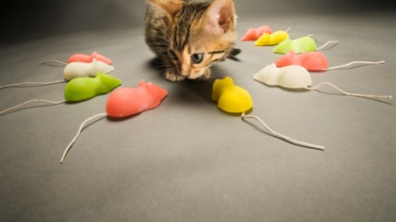 Bengal kitten surrounded by toy mice, close-up