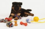German Shepherd puppy (Canis familiaris) sitting on a white rug, surrounded by toys